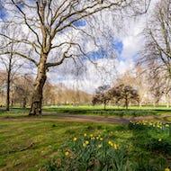 Green Park next to Buckingham Palace