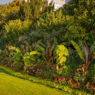 Plants and flowers in Kensington Gardens