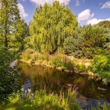A pond in Regent's Park