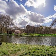 A swan enjoying the beauty of St James's Park