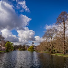A view from St James's Park towards Buckingham Palace